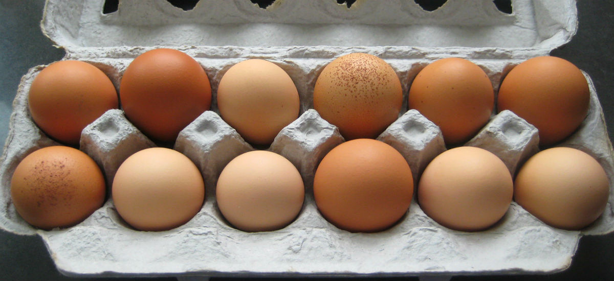 11 Reasons why Eggs are the Healthiest Food on Earth