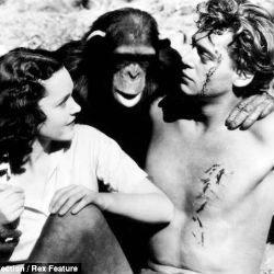 The chimp was unusually long-lived, surviving beyond both Weissmuller and Maureen O'Sullivan, who played Tarzan's mate Jane. Chimpanzees only live an average of 35 to 45 years in captivity. Guinness World Records had cited Cheetah as the world's oldest non-human primate.
