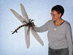 Scientists bred this oversized dragonfly in the laboratory using an oxygen rich environment.