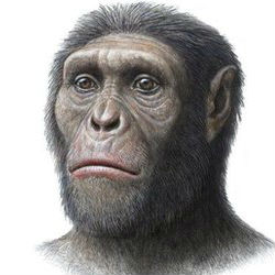 A discovery of a large rock containing remnants of a skeleton of an early human ancestor is believed to be the remains of 'Karabo', the type skeleton of Australopithecus sediba, first discovered at the Malapa Site in the Cradle of Humankind in 2009.