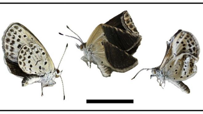 Butterflies captured s...