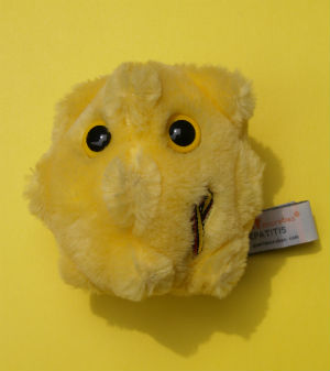 This cute plush figure is intended to represent Hepatitis C, and the attendant danger associated with the disease.