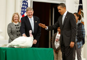 Did one turkey pardon another? Obama pardoned two turkeys this Thanksgiving.