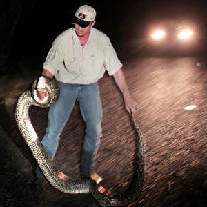 Python hunters will need to lay out a $25 registration fee and complete an online training course, focusing on gun safety while hunting the snakes.