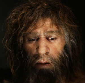 Neanderthal men looked similar to modern humans, with a few notable differences. This is a waxen model.