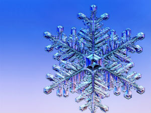 This mature snowflake passed through several cycles of refreezing, giving it its complex pattern.