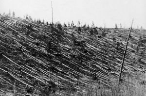 Even today, more than a century later, the Siberian forest remains littered with the fallen remains of 80 million trees, flattened in a single, fiery instant.