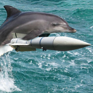 In previous fake reports, the Ukrainian media said that the three military trained dolphins didn't return to their base in the Crimean port of Sevastopol.