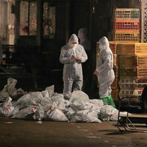 State media ran pictures of animal health officials in protective overalls and masks working through the night at the market, scribbling notes as they stood over piles of poultry carcasses in plastic bags in an area guarded by police and cordoned off with plastic tape.