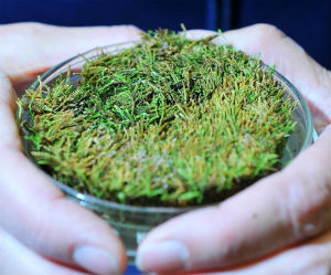 Mosses are especially hardy and ancient - 400 million years old. Mosses played a key role in moving life from water to land in evolution.
