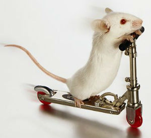 Previous research has been unsuccessful at achieving any significant nerve regeneration in mice with spinal injuries - and while the mice have not regained their ability to walk, they did experience a restoration of bladder function.