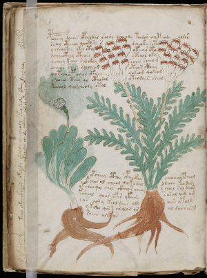 The Voynich Book has baffled readers for centuries.