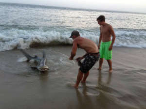 The shark was later released back to the sea.