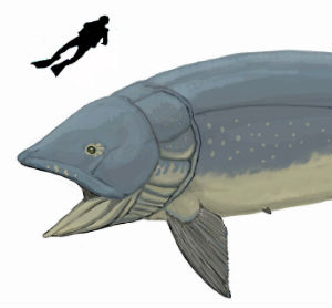 Living 160 million years ago, the gigantic Leedsichthys fish could have grown as large as 52 feet and weighed more than two busses.