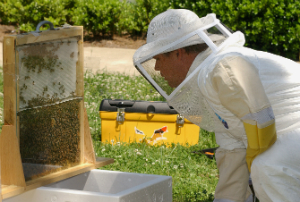 Research suggests that fungicides play a distinct role in Colony Collapse Disorder.
