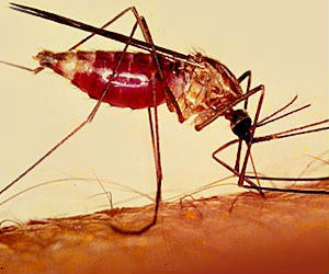 Malaria kills about 600,000 people annually and infects more than 200 million.