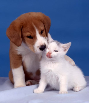 Very cute kitten and puppy