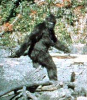 This classic photo of Bigfoot was long proven to be phony.