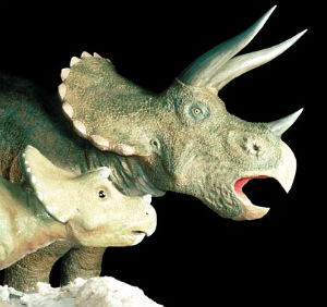 The Chasmosaurine is a distant cousin of the more famous Triceratops.