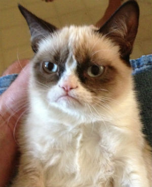 At one time just an Internet meme, 'grumpy cat' has become the general mood of the American public in regards to Obamacare.