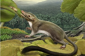 According to the study, as published in the latest issue of Biology Letters, the first placental mammal lived from 88.3 to 91.6 million years ago.