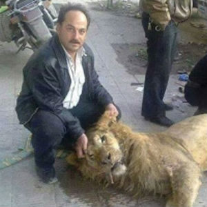 The lack of food forced Al-Ghouta residents to kill a lion from Damascus Zoo for food.