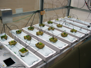 Scientists are already testing how plants could grow on Mars in laboratories on Earth.