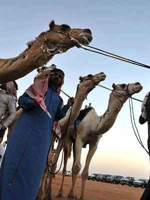 Scientists have linked the human cases of the virus to camels. Saudi authorities issued a warning that anyone working with camels or handling camel products should take extra precautions by wearing masks and gloves.