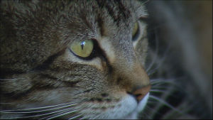 Bakersfield's hero cat saved a four-year-old boy from a dog attack.