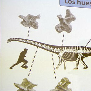 According to the measurements of its gigantic thigh bones, the herbivore would have been 130 feet long and 65 feet tall.