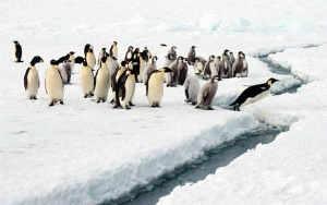 Penguins are not the only creatures to be impacted by climate change. Our entire civilization is endangered.