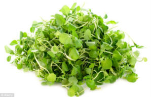 Watercress was the winner in the study, scoring 100 in the study.