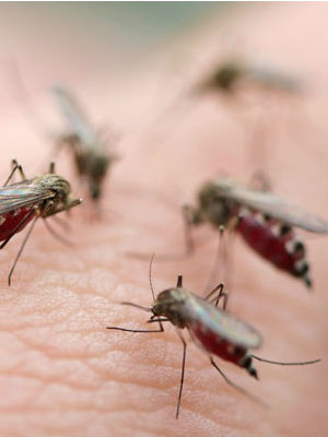 While there have been significant reductions in the numbers falling ill and dying from the mosquito-borne disease, malaria still claims the lives of more than 600,000 people annually.