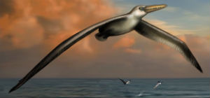 P. sandersi is an ancient bird that could have had a wingspan between 20 and 24 feet.