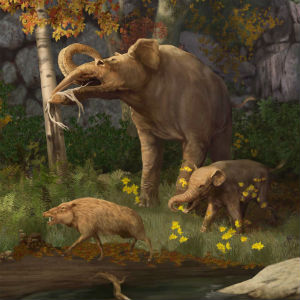 A new study suggests that the earliest American natives hunted to extinction, a precursor to modern elephants.
