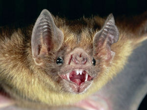 Bats can see with polarized light, and may use it to navigate with, a new study says.