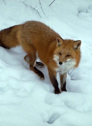 free fox news online  »  9 Photo » Creative..!