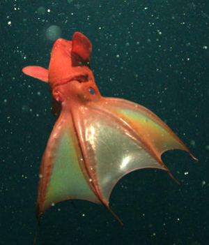 New discovery on mysterious vampire squid shocks scientists
