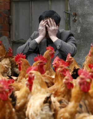 5.3 MILLION chickens euthanized on Iowa farm as bird flu epidemic devastates