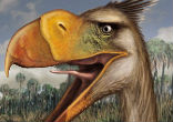 Image of Researchers say that the Llallawavis likely lived around 3.5 million years ago, near the end of terror birds' reign. It stood about four feet tall and weighed about 40 pounds.