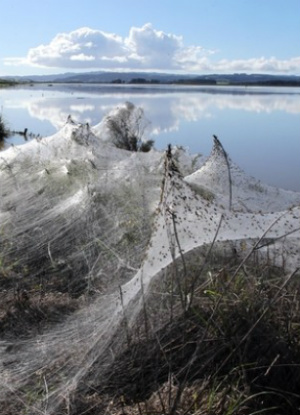 Raining spiders? Large areas of Australia covered in spider webs