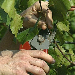 Wednesday, May 6 - Homily: The Pruning of the Vine