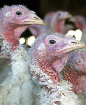 Nebraska orders STATE OF EMERGENCY over H5N2 avian flu virus