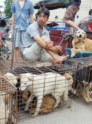 China's Yulin Dog Meat Festival continues despite global outrage