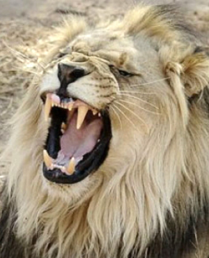 Tour guide risks life attempting to save American tourist horrifically killed by lion