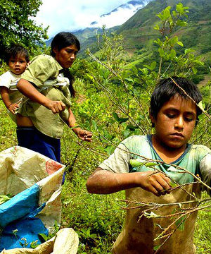 Women, children freed from slavery in Peruvian coca operation