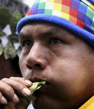 Will Pope Francis chew coca leaves on his forthcoming trip to Bolivia?