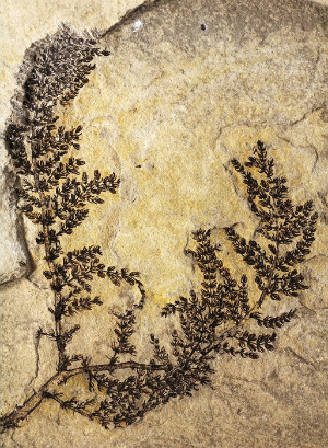 World's oldest 'first flower' discovered in Spain's mountainous regions