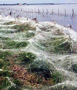 'SLIME OF THE DEVIL:' Argentinean villages engulfed with spider webs