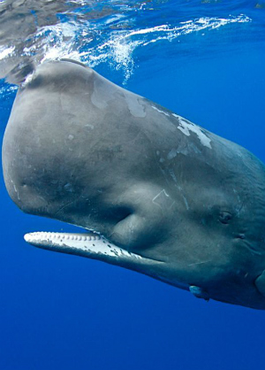 New research gives insight into whale communication